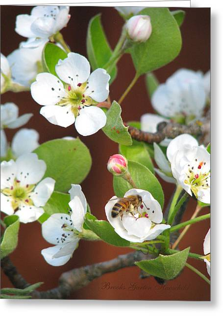 Fruit Tree Art Greeting Cards - Pear Blossom Honey En Route Greeting Card by Brooks Garten Hauschild