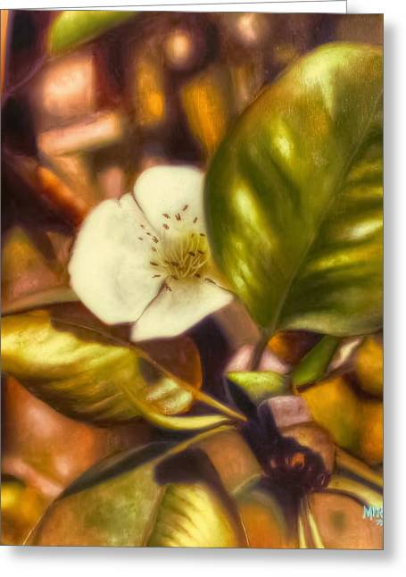 One Pear Greeting Cards - Pear Blossom Greeting Card by Melissa Herrin