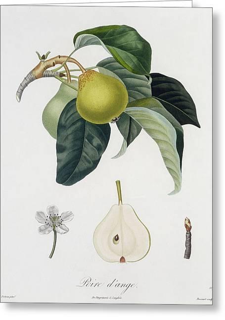 Pear Greeting Card by Pierre Antoine Poiteau