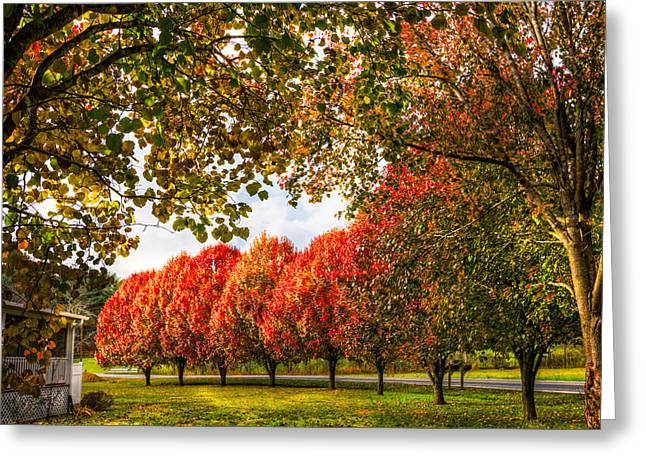 Tn Greeting Cards - Pear Trees along the Lane Greeting Card by Debra and Dave Vanderlaan