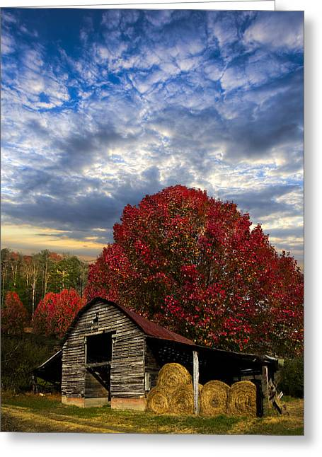 Tn Greeting Cards - Pear Trees on the Farm Greeting Card by Debra and Dave Vanderlaan