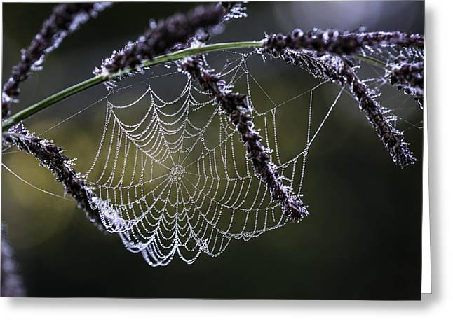 Dewdrops Greeting Cards - Pearl Drops On Silk Greeting Card by Dale Kincaid