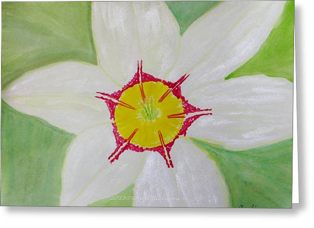 Youthful Greeting Cards - Pearl white flower Greeting Card by Sonali Gangane