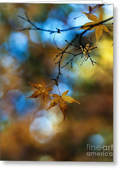 Pearlescent Acers Greeting Card by Mike Reid