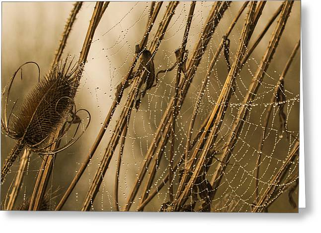 Wildlife Refuge. Greeting Cards - Pearls in the Teasel Greeting Card by Angie Vogel