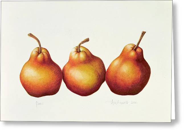 Botanical Greeting Cards - Pears Greeting Card by Annabel Barrett