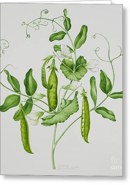 Fresh Green Paintings Greeting Cards - Peas Greeting Card by Sally Crosthwaite