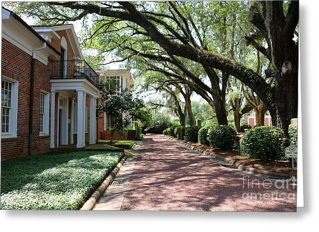 Thomasville Greeting Cards - Pebble Hill Plantation Walkway Greeting Card by Carol Groenen