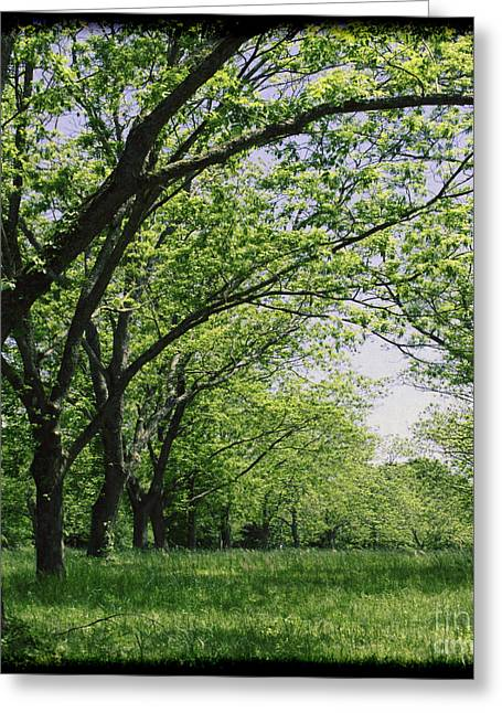 Wild Orchards Greeting Cards - Pecan Tree Tunnel Greeting Card by Sherry Bowen