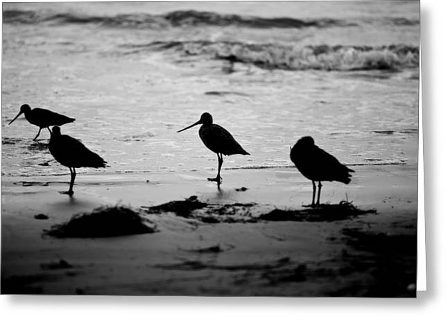 Beach Birds Greeting Cards - Peckerheads Greeting Card by Peter Tellone
