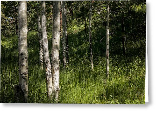 Spectacular Greeting Cards - Pecos Wilderness Aspen - Pecos New Mexico Greeting Card by Brian Harig