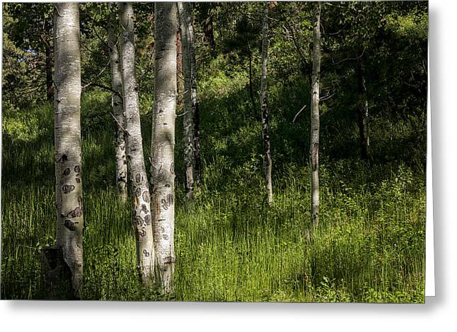 Pecos Wilderness Aspen - Pecos New Mexico Greeting Card by Brian Harig