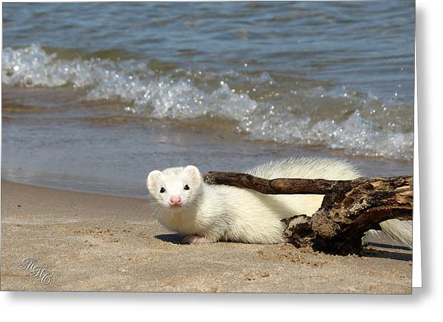 White Ferret Greeting Cards - Peek-a-Boo Greeting Card by Alicia McNally