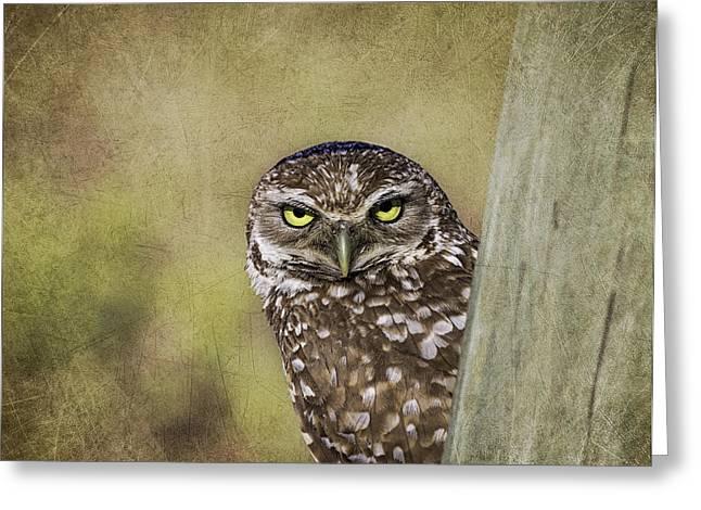 Kim Photographs Greeting Cards - Peek A Boo - Burrowing Owl Greeting Card by Kim Hojnacki