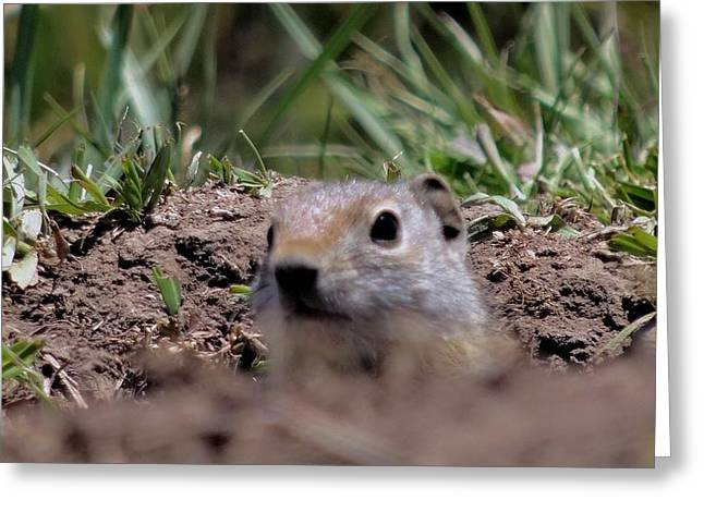 Ground Level Photographs Greeting Cards - Peek A Boo Greeting Card by Dan Sproul