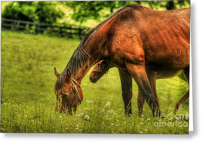 Filly Art Greeting Cards - Peek A Boo Greeting Card by Darren Fisher