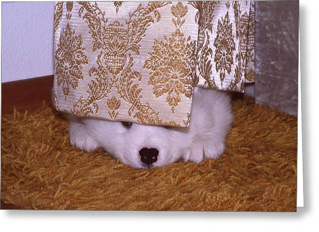 Puppies Photographs Greeting Cards - Peek-A-Boo Greeting Card by Ginny Barklow