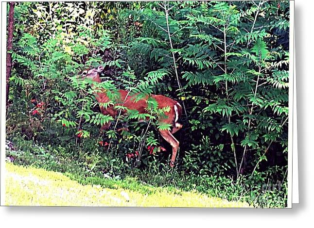 Next To Tree Greeting Cards - Peek A Boo I See You Greeting Card by Kimberlee  Baxter