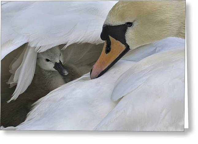 Caring Mother Greeting Cards - Peek-a-boo Greeting Card by Inge Riis McDonald