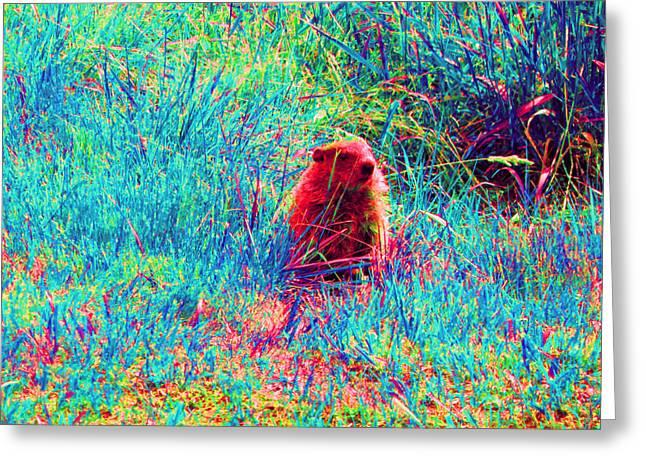 Groundhog Digital Greeting Cards - Peek-A-Boo Greeting Card by Joseph Wiegand