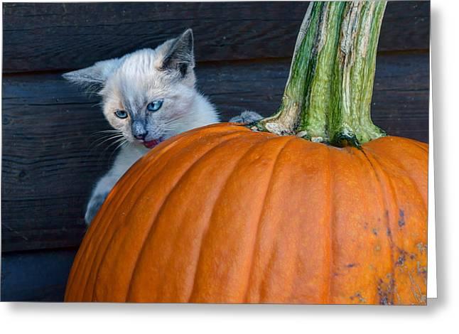 Cute Kitten Greeting Cards - Peek-a-boo Greeting Card by Nikolyn McDonald