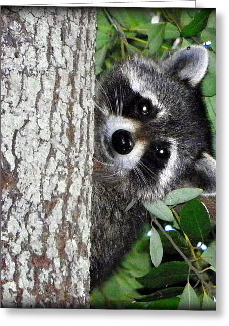Peek A Boo Raccoon Greeting Card by Sheri McLeroy