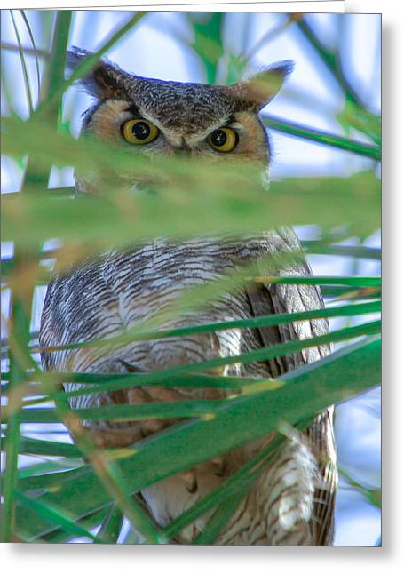 Peek-a-boo Greeting Card by Robert  Aycock