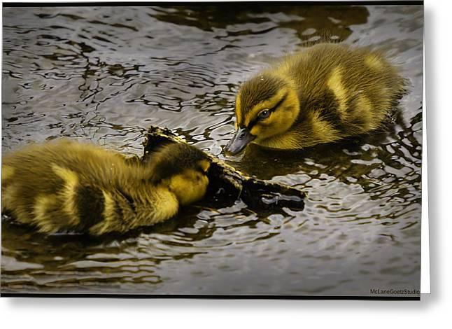 Thumbs Down Greeting Cards - Peeka boo Ducklings Greeting Card by LeeAnn McLaneGoetz McLaneGoetzStudioLLCcom
