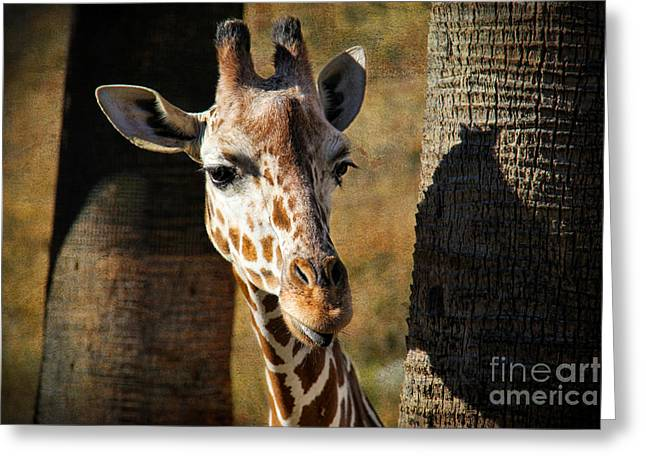Eyelash Greeting Cards - Peekaboo Giraffe Greeting Card by Mariola Bitner