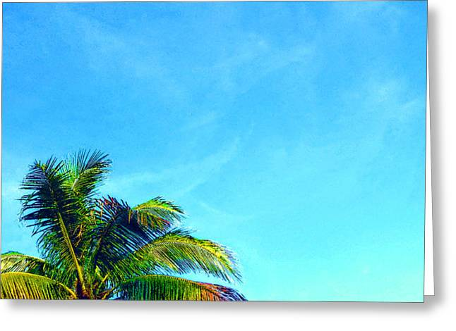 St Thomas Greeting Cards - Peekaboo Palm - Tropical Art By Sharon Cummings Greeting Card by Sharon Cummings