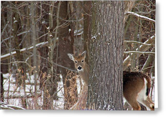 Pond In Park Greeting Cards - Peeking Deer Greeting Card by Aimee L Maher Photography and Art