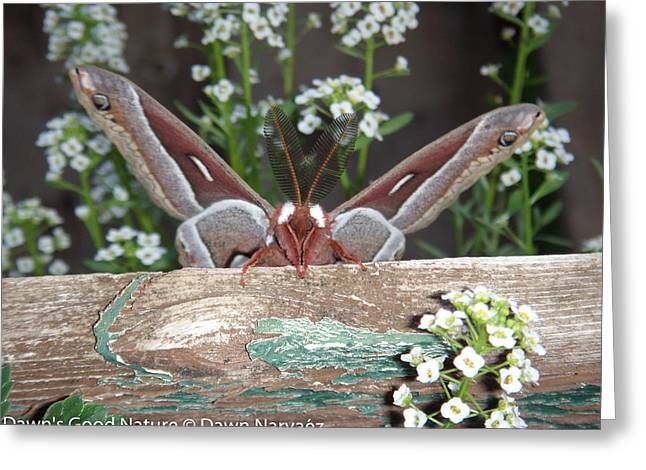 Butterlfy Greeting Cards - Peeking Mothra Greeting Card by Dawn