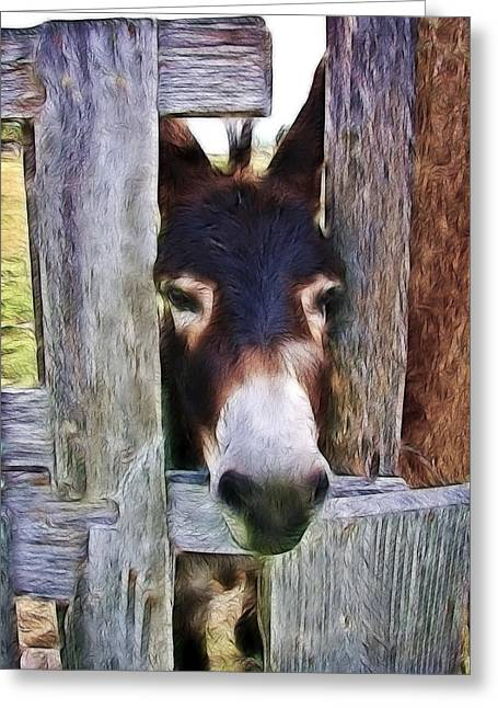 Barn Pen And Ink Greeting Cards - Peeking Thru The Fence Greeting Card by Athena Mckinzie