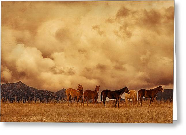 Turbulent Skies Greeting Cards - Peeples Valley Horses Greeting Card by Priscilla Burgers
