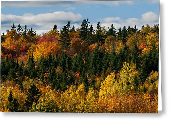 Fallen Leaf Greeting Cards - PEI Autumn Trees Greeting Card by Matt Dobson