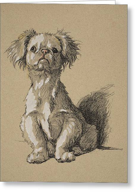 Puppies Drawings Greeting Cards - Peke, 1930, Illustrations Greeting Card by Cecil Charles Windsor Aldin