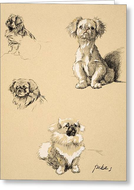 Pekes, 1930, Illustrations Greeting Card by Cecil Charles Windsor Aldin