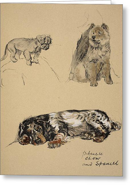 Pekinese, Chow And Spaniel, 1930 Greeting Card by Cecil Charles Windsor Aldin