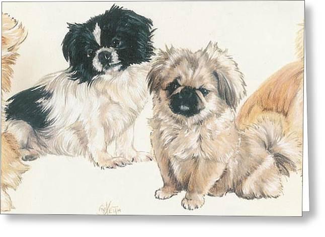 Toy Dog Greeting Cards - Pekingese Puppies Greeting Card by Barbara Keith