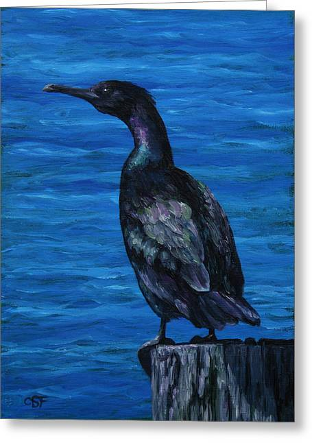 Sea Bird Greeting Cards - Pelagic Cormorant Greeting Card by Crista Forest