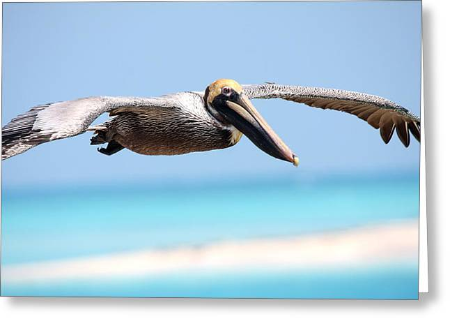 Dry Tortugas National Park Greeting Cards - Pelican at Dry Tortugas National Park Greeting Card by Jetson Nguyen