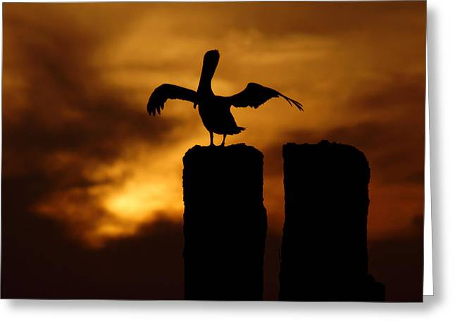 Beach At Night Greeting Cards - Pelican at Sunset on Gandyhenge Greeting Card by Daniel Woodrum