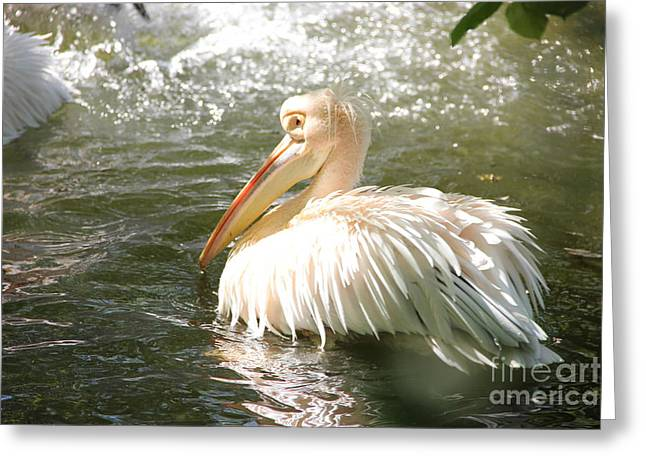 Waterdrops Photographs Greeting Cards - Pelican Bath Time Greeting Card by Jackie Mestrom