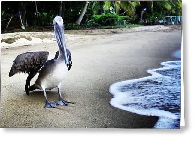 Rincon Greeting Cards - Pelican Beach Greeting Card by Loretta Cassiano