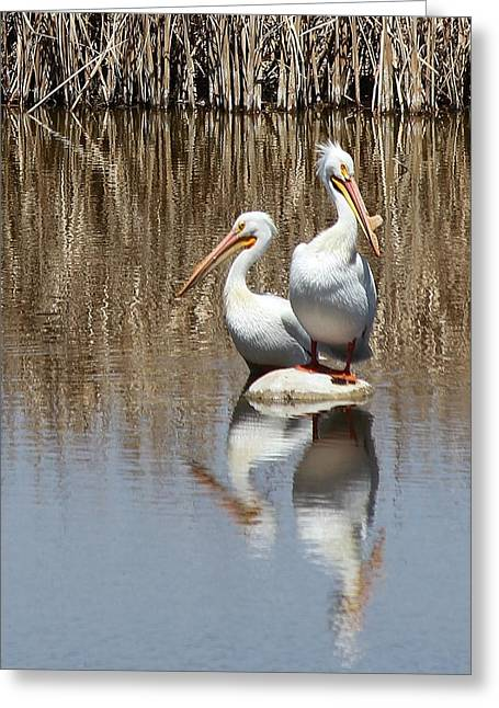 Pelican Deuce Greeting Card by Diane Alexander