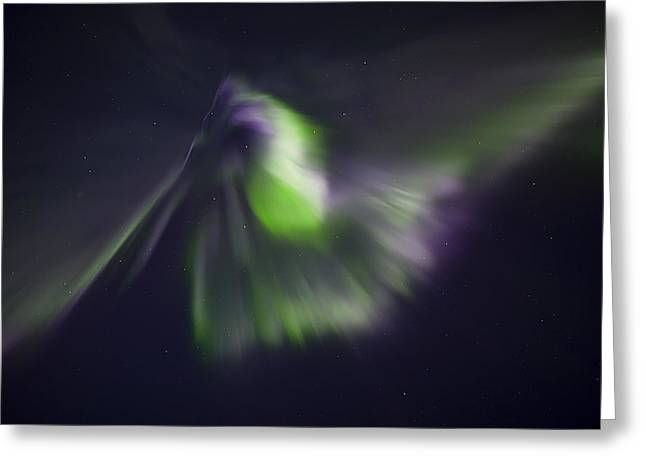 Aurora Greeting Cards - Pelican Greeting Card by Ed Boudreau
