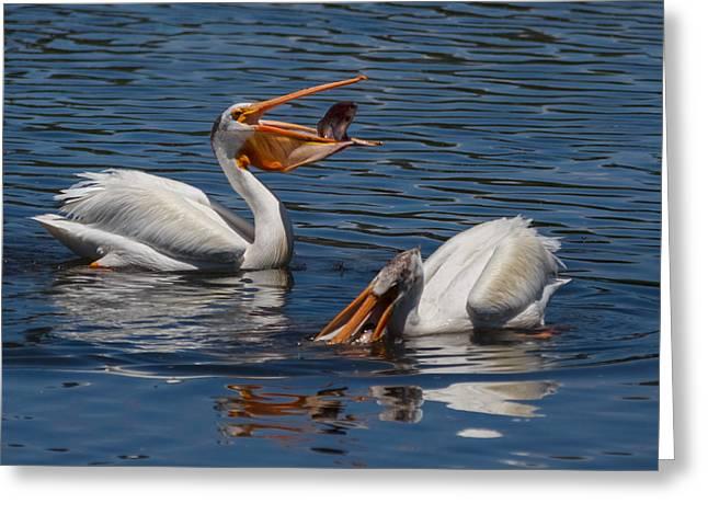 Mykiss Greeting Cards - Pelican Fishing Buddies Greeting Card by Kathleen Bishop