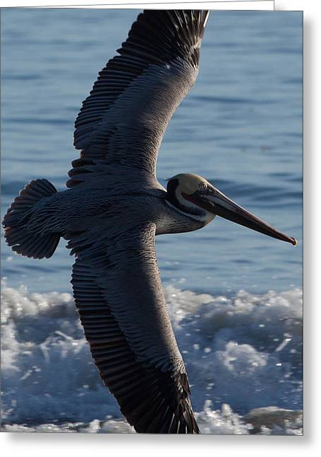John Daly Greeting Cards - Pelican Flight Greeting Card by John Daly