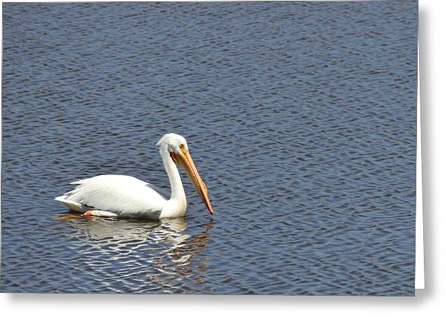 Fountain Creek Nature Center Greeting Cards - Pelican Float Greeting Card by Diane Alexander