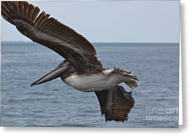 Pelicans Flying Greeting Cards - Pelican Fly By Greeting Card by Carol Groenen